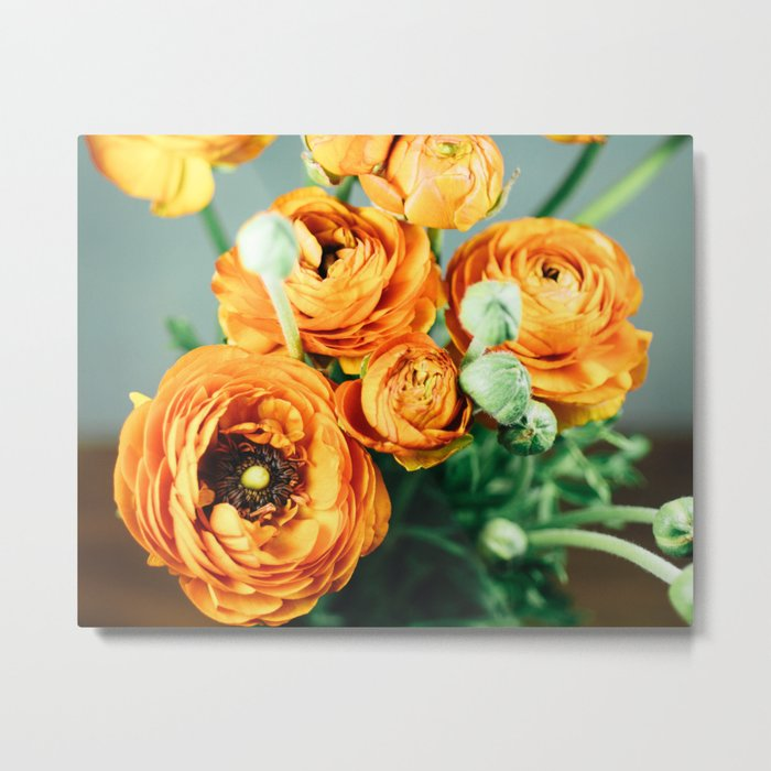 Orange ranunculus Metal Print