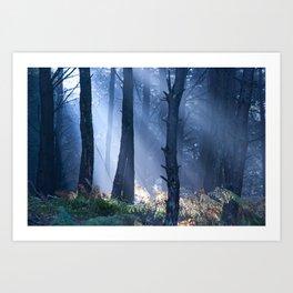 Morning Light Art Print