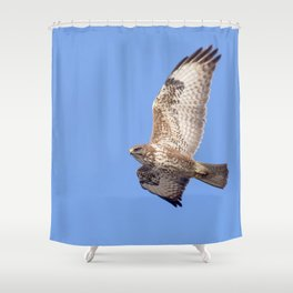 Common Buzzard (Buteo buteo) in flight Shower Curtain