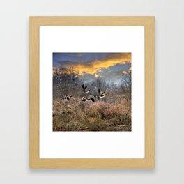 Sunset Geese Landscape Framed Art Print