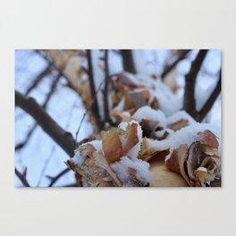 Snowy Birch Tree Canvas Print