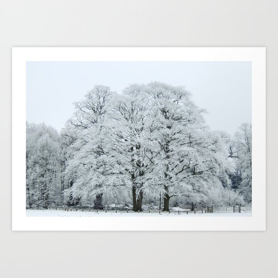 Frozen and Frosted Trees Art Print