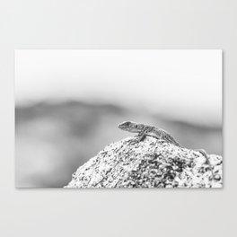 Ocellated lizard Canvas Print