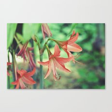 Lilly Love Canvas Print