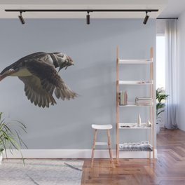 Atlantic puffin in flight with her sand eels Wall Mural