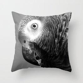 Curiosity Of Bo - African Grey Parrot Photography Animals Throw Pillow