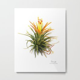 Tillandsia Druid Air Plant Watercolors Metal Print