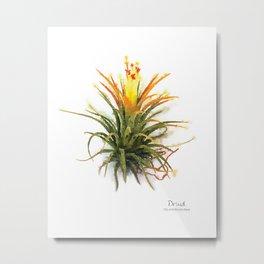 Tillandsia Druid Air Plant Watercolors Metal Print