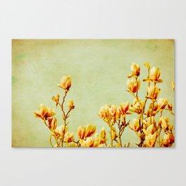 wednesday's magnolias Canvas Print