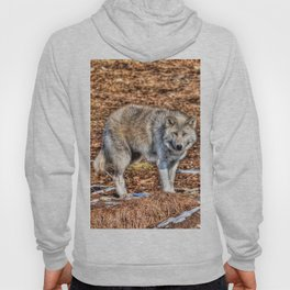 Arctic Wolf and Pine Tundra Hoody