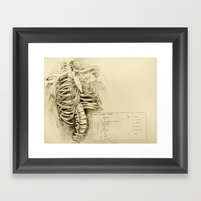 Anatomical Drawing 1 Bones Of The Spine And Thorax Framed Art