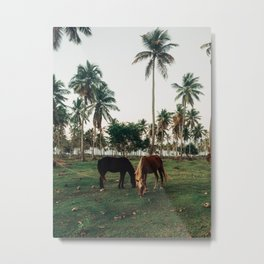 Horses in Samana, Dominican Republic Metal Print