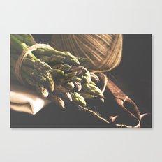 Fresch Asparagus on the table Canvas Print