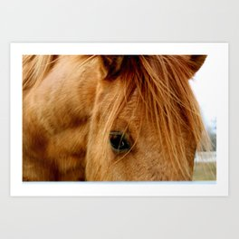 """""""a horse of a different color"""" Art Print"""