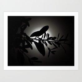 Lost in Moonlight Art Print