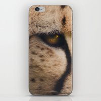 cheetah iPhone & iPod Skins featuring Cheetah  by Pauline Fowler ( Polly470 )
