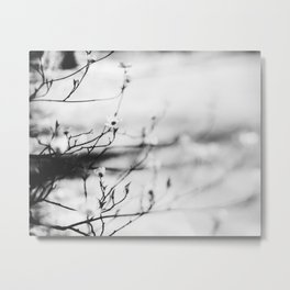 Afternoon Metal Print