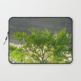 Thuja occidentalis Laptop Sleeve