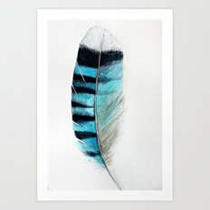 Blue Jay Feather - Watercolor Art Print
