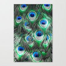 Selective peacock Canvas Print