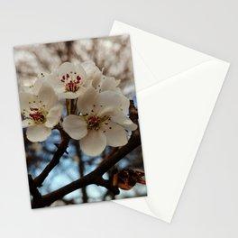 Spring, mock orange blossoms Stationery Cards