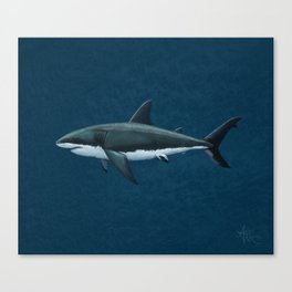 """Carcharodon carcharias"" by Amber Marine  ~ Great White Shark Art, (Copyright 2015) Canvas Print"
