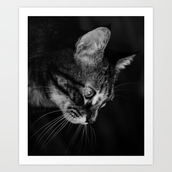 kitten in black and white Art Print