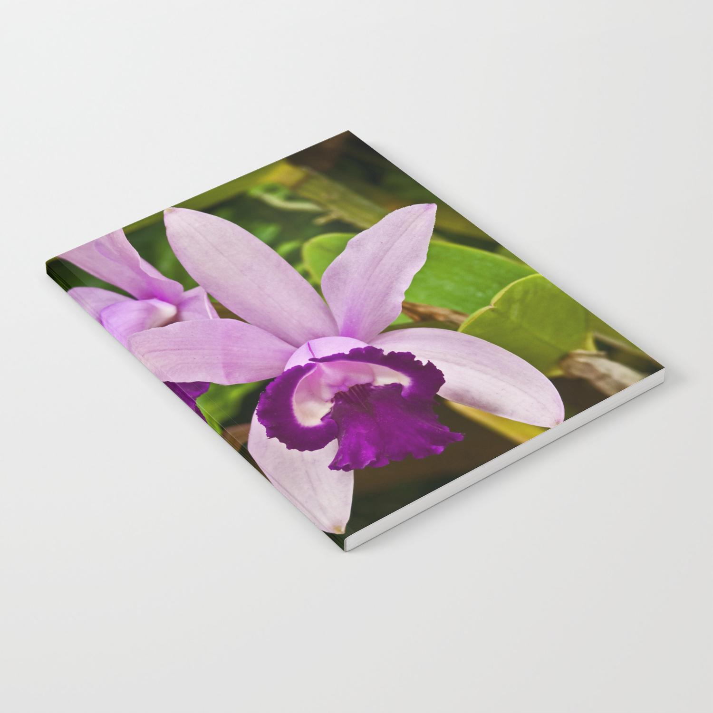 Cattleya Orchid Notebook