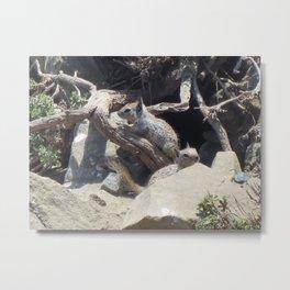San Simeon Squirrel Metal Print