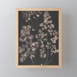 Black Maidenhair Framed Mini Art Print