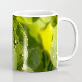 Rain drips on a nasturtium leaf Coffee Mug