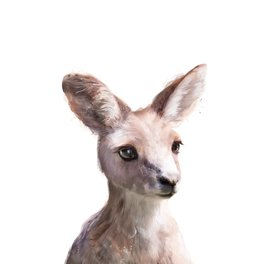 Art Print - Little Kangaroo - Amy Hamilton