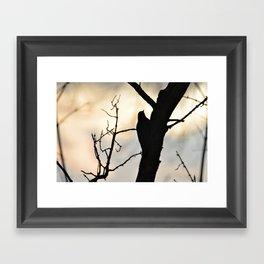 Bird watching Sunset Framed Art Print