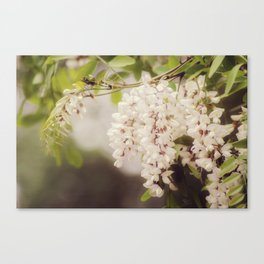Popcorn Tree Canvas Print