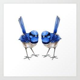 Splendid Blue Wrens, Pair Art Print