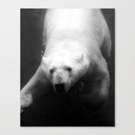 Polar Bliss Canvas Print