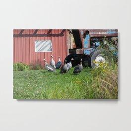 Gaggle of Guinea Hens Metal Print