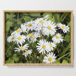 COMMON DAISY Serving Tray