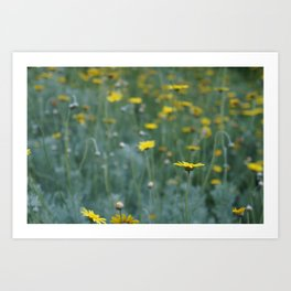 Little Yellow Daisy Art Print