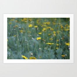 Little Yellow Daisy Art Print