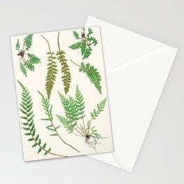 Ferns on Cream II - Vintage Botanical Print Stationery Cards