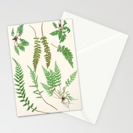 Ferns on Cream II - Vintage Botanical Print Stationery Cards