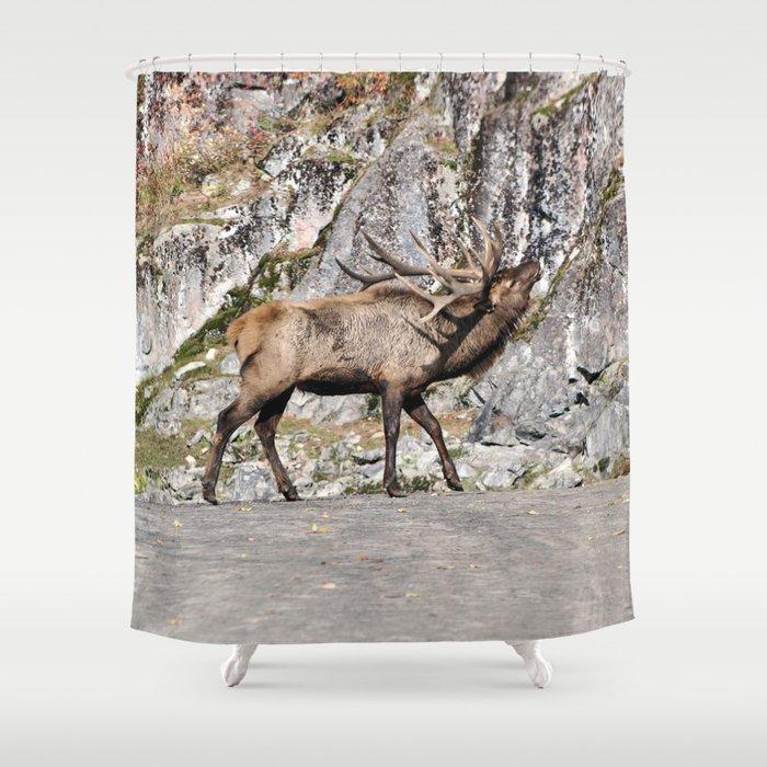Wapiti Bugling Bull Elk Shower Curtain By Nancyacarter