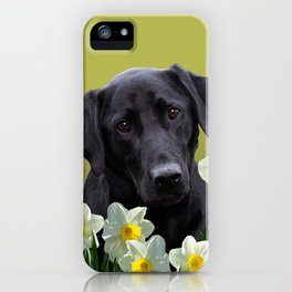 White daffodils with Labrador retriever iPhone Case