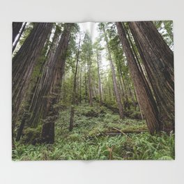 Fern Alley - Redwood Forest Nature Photography Throw Blanket