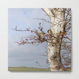 Rosehips, Birch And Sky Metal Print