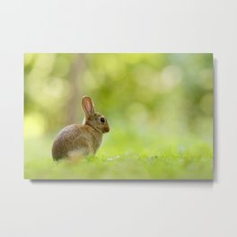 The Happy Rabbit Metal Print