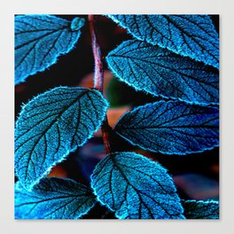 Peacock Blue Leaves Nature Background #decor #society6 #buyart Canvas Print
