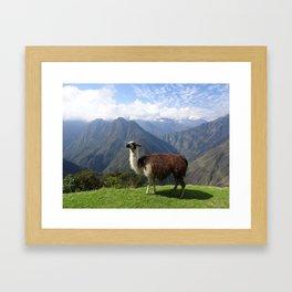 Inca Trail Llama, Peru Framed Art Print