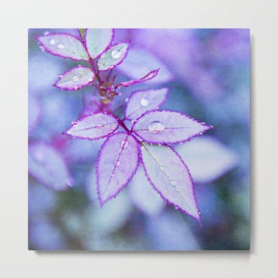 Lilac Rim Metal Print